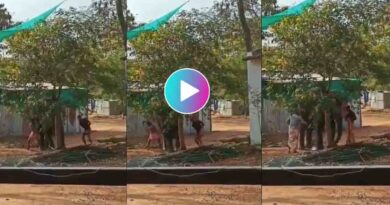 In Kerala, The Elephant is tied to a tree and beaten video viral on social media
